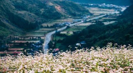 10 Địa điểm du lịch Hà Giang – Mùa Hoa Tam Giác Mạch